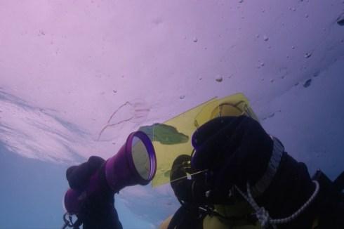 Plongeur Under The Pole