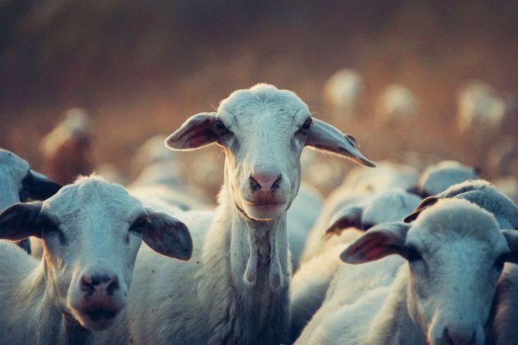 Coucou toi, ça te dit du bon fromage de chèvre ?