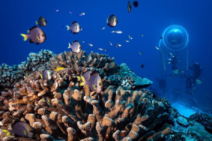 Des coraux dans les fonds marins avec une capsule scientifique au second plan