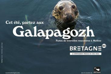 Phoque dans l'eau de mer en Bretagne