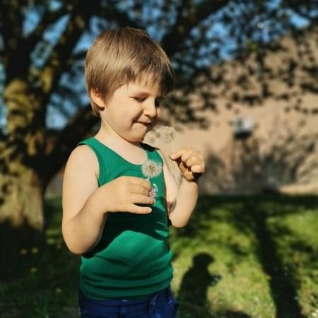 Samuel s'exerce à souffler sur une fleur de pissenlit.
