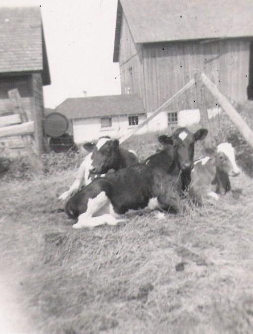 Porter's Farm