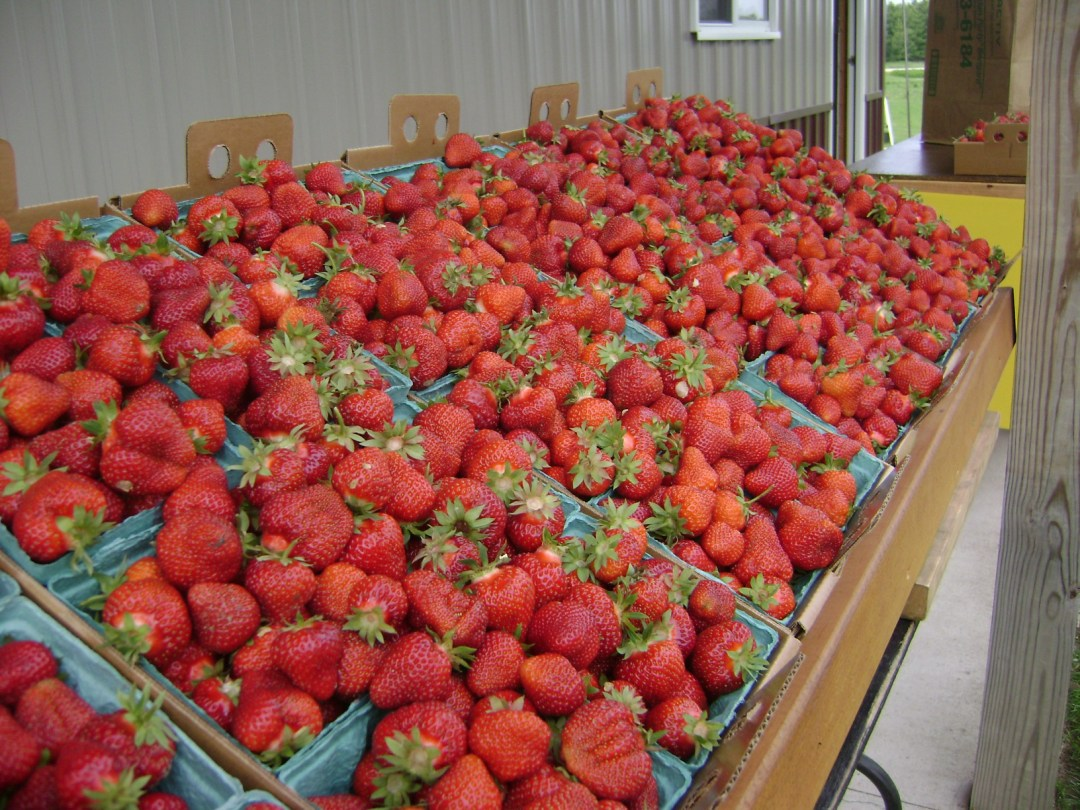 Strawberry Row