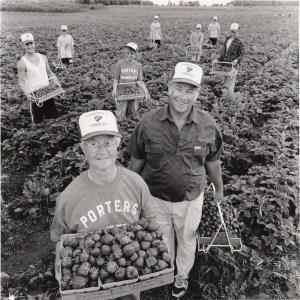 crew picking berries
