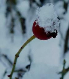Le beau temps revient, la neige fondJuliette-Ls