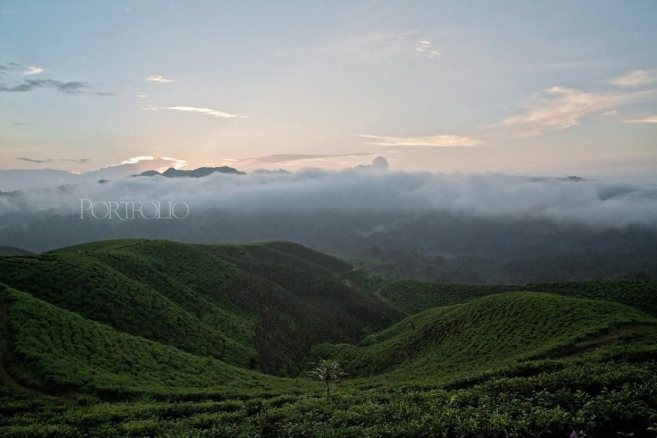 Mt. Halimun, West Java, Indonesia (1)