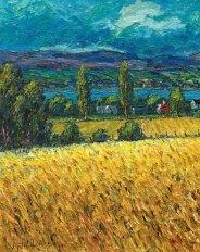 Corn Field In Bright Sunlight (1/2)