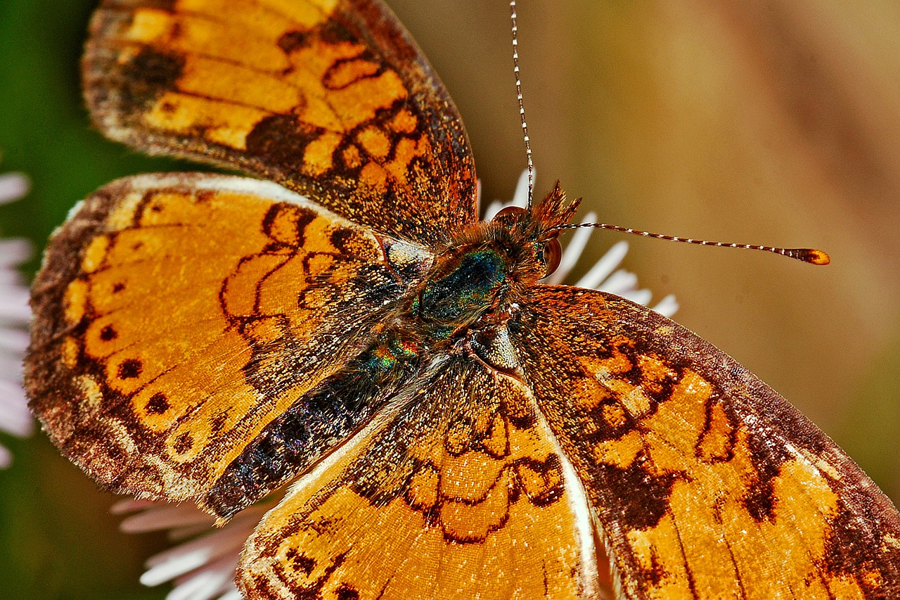 Catching a Golden Butterfly – Portfolio Charts