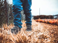 Discount Tickets to The Pumpkin Patch Maize