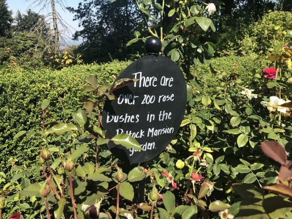Pittock Mansion Gardens