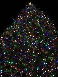 Portland tree lighting ceremony