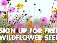 Arm & Hammer free wildflower seeds