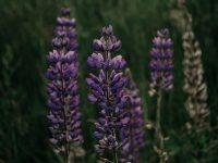 fall native plant sale