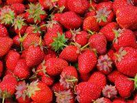 strawberries you-pick farms portland