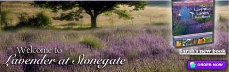 Author or new book, Lavender at Stonegate.