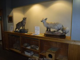 Display in the Entry area.