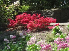 Cystal_Rhododendrons_IMG_5661