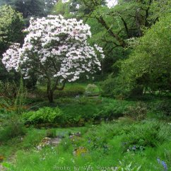 Being mature garden there a many large rhododendron bushes.