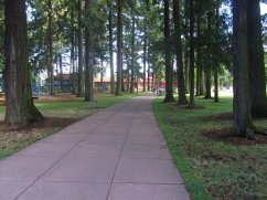 Pathway through a wooded area.