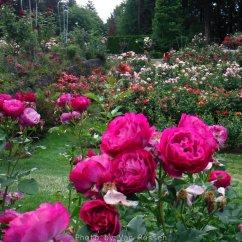RoseGarden_DSCF2547