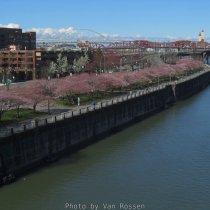 WaterfrontPark_IMG_3857