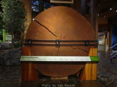 ForestMuseum_IMG_1947