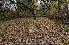 A hidden corner in the park