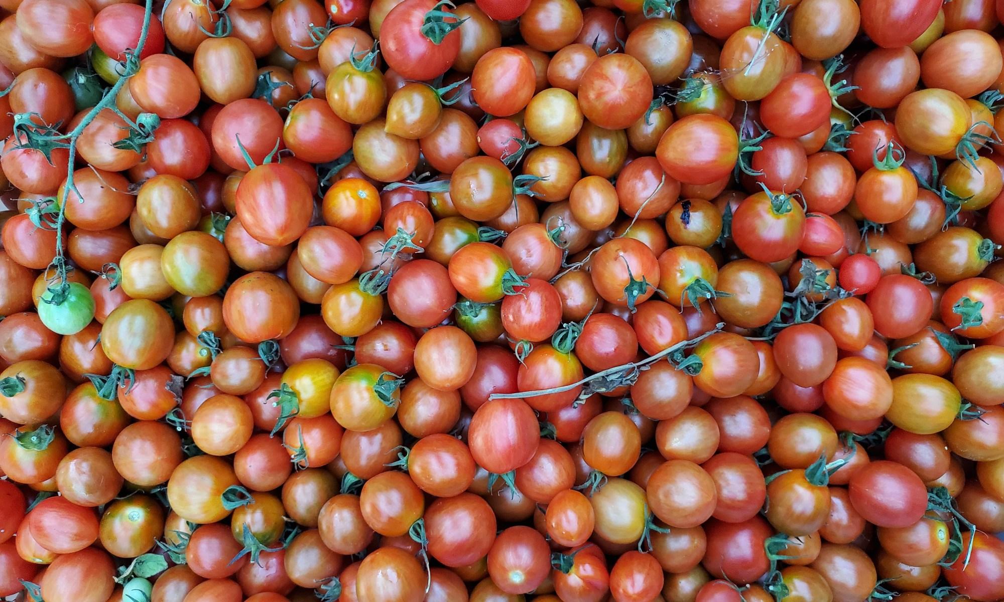 Agi Red tomato