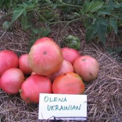 olena Ukrainian
