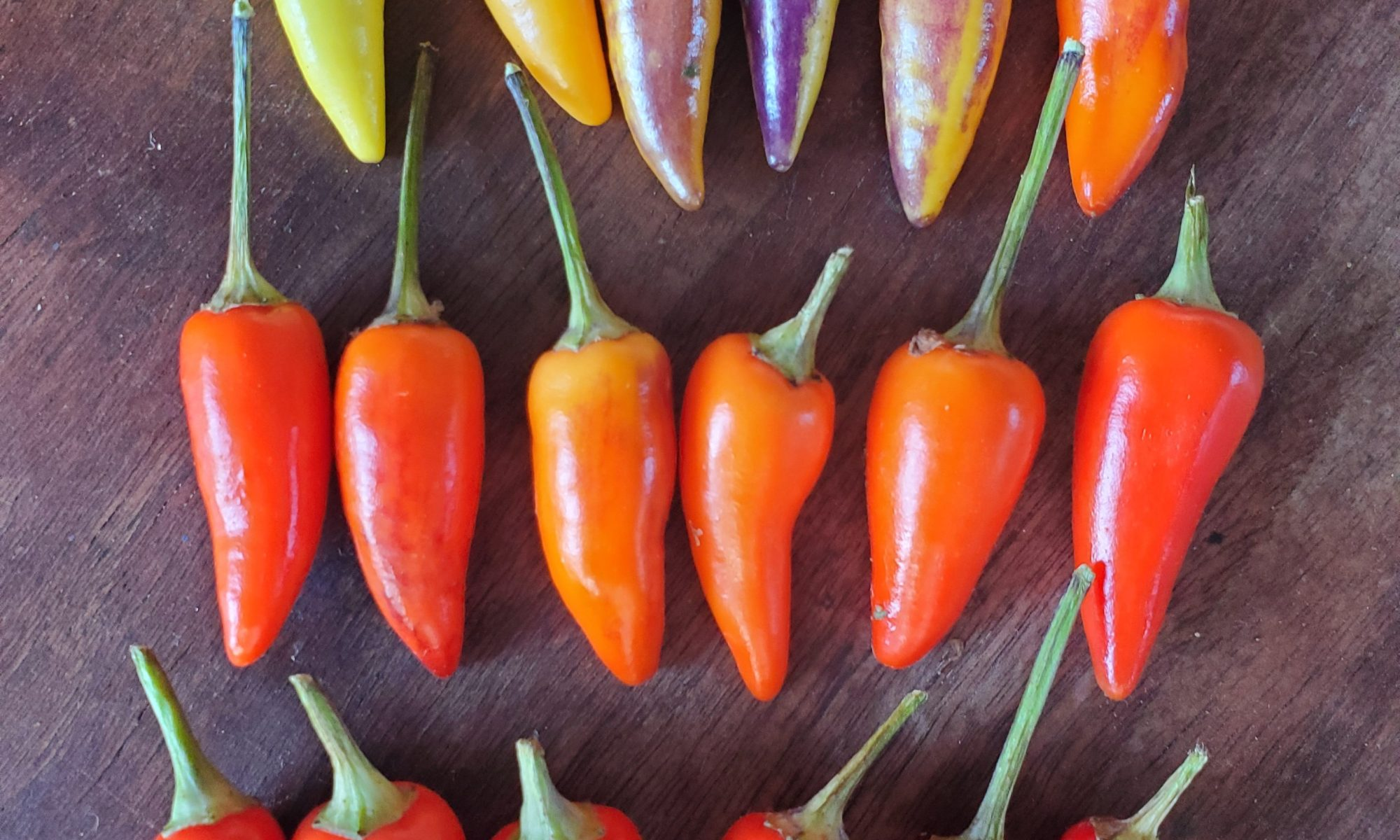 napoli pepper