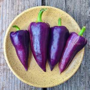 violet sparkle