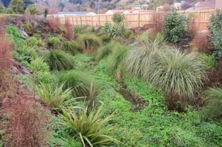 Portobello Creek Planting Restoration