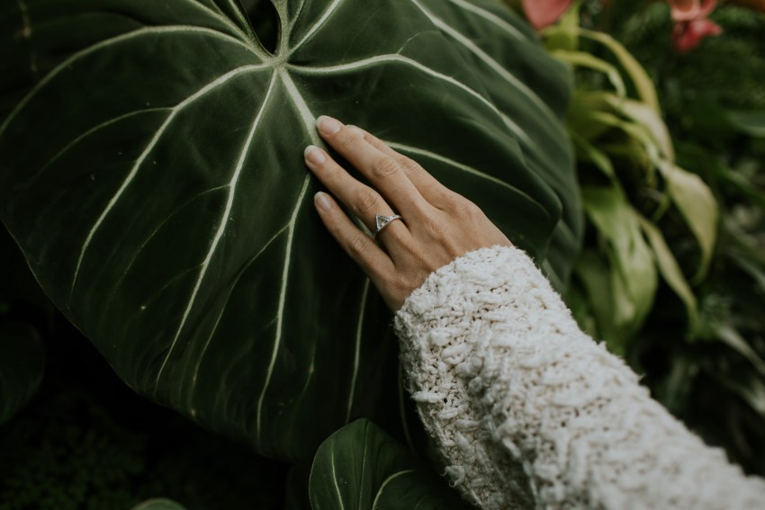 engagement in greenhouse