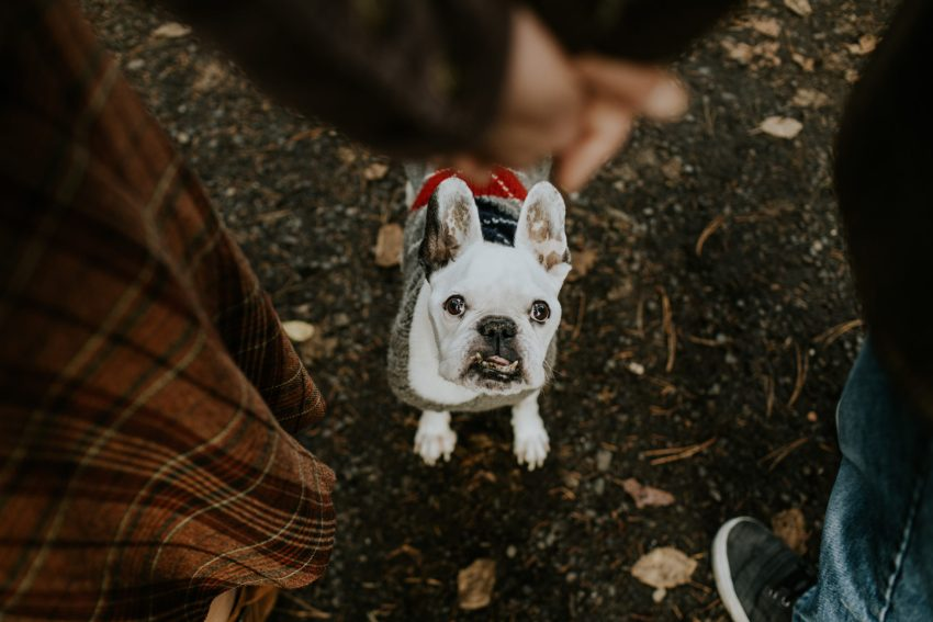 couple holding hands french bulldog in sweater