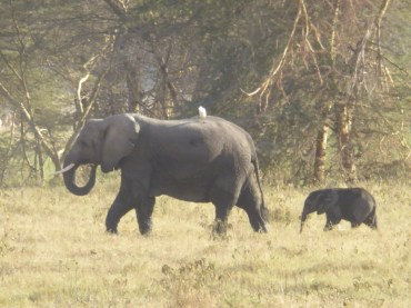 Mother & baby elephant in Amboseli National Park