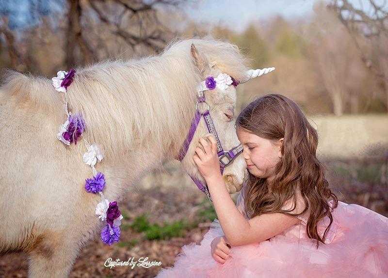 5 Unicorn photo session