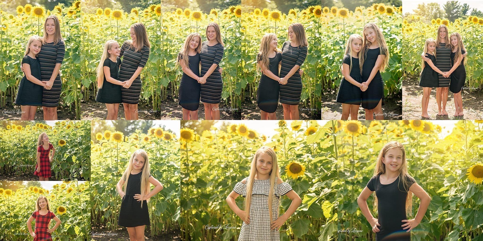 Sunflower Family Photo Session Illinois