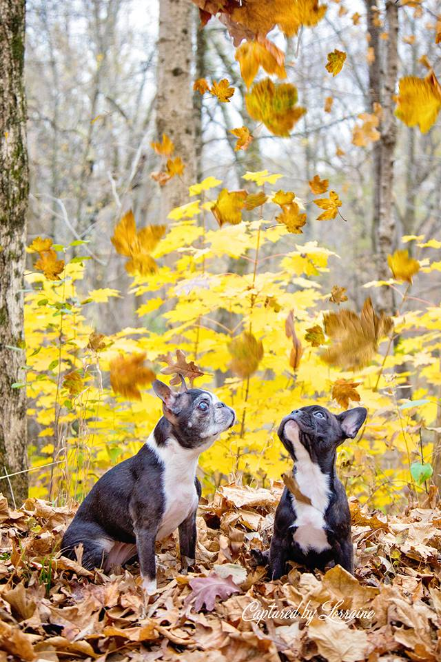 Fall Dog Photoshoot