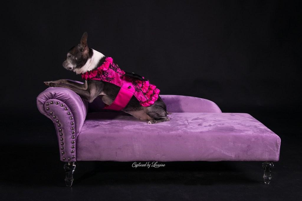 Pet Photography Huntley Illinois