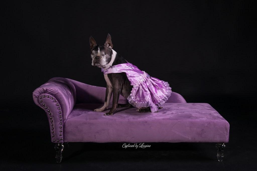 Pet Photography Illinois
