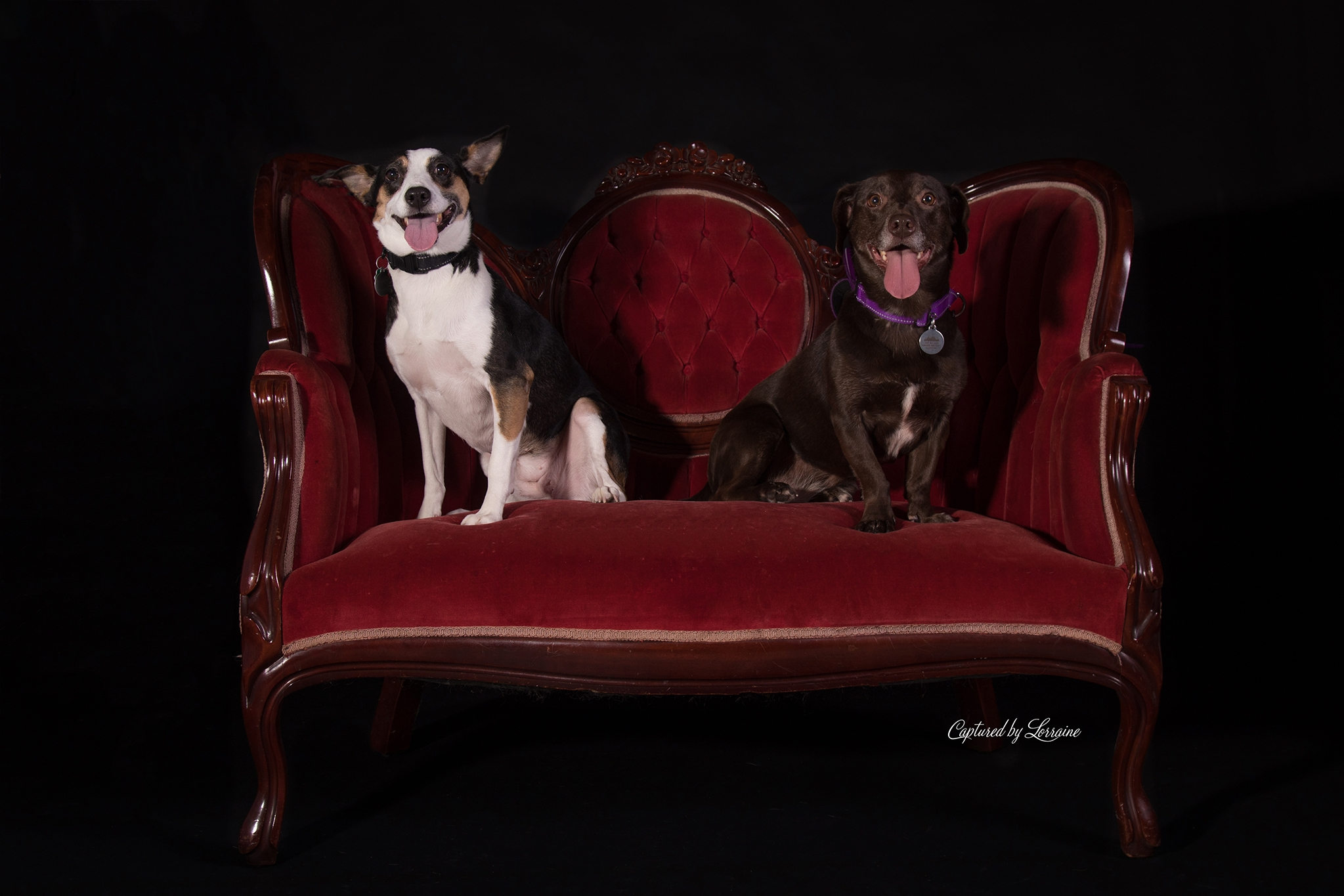 Bella and Gypsy-Northern Illinois Pet Photography