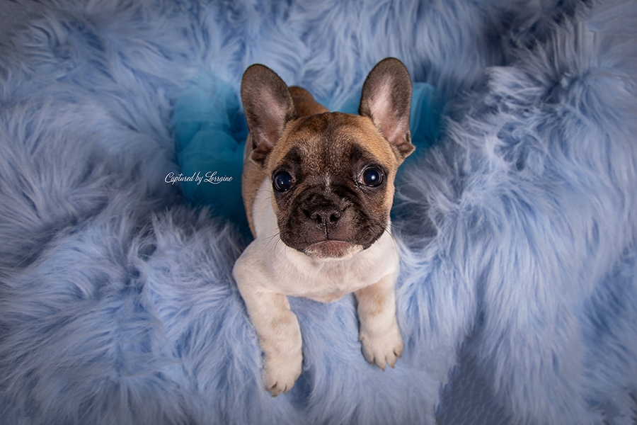 Illinois Pet Photographer