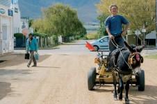 donkey cart_9632