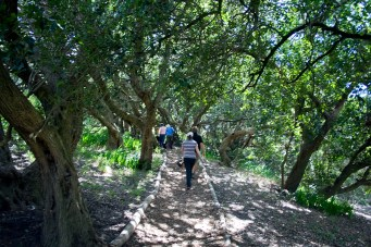 """Under Milkwood"" path"