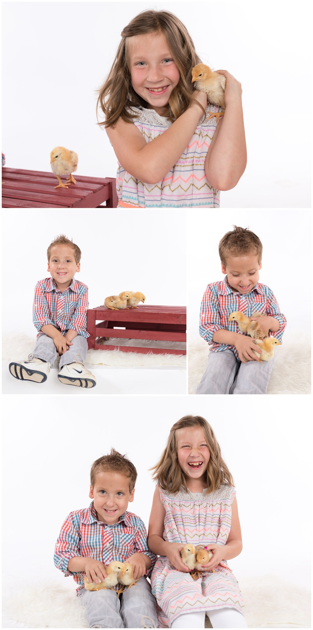 Kids portraits with baby chicks