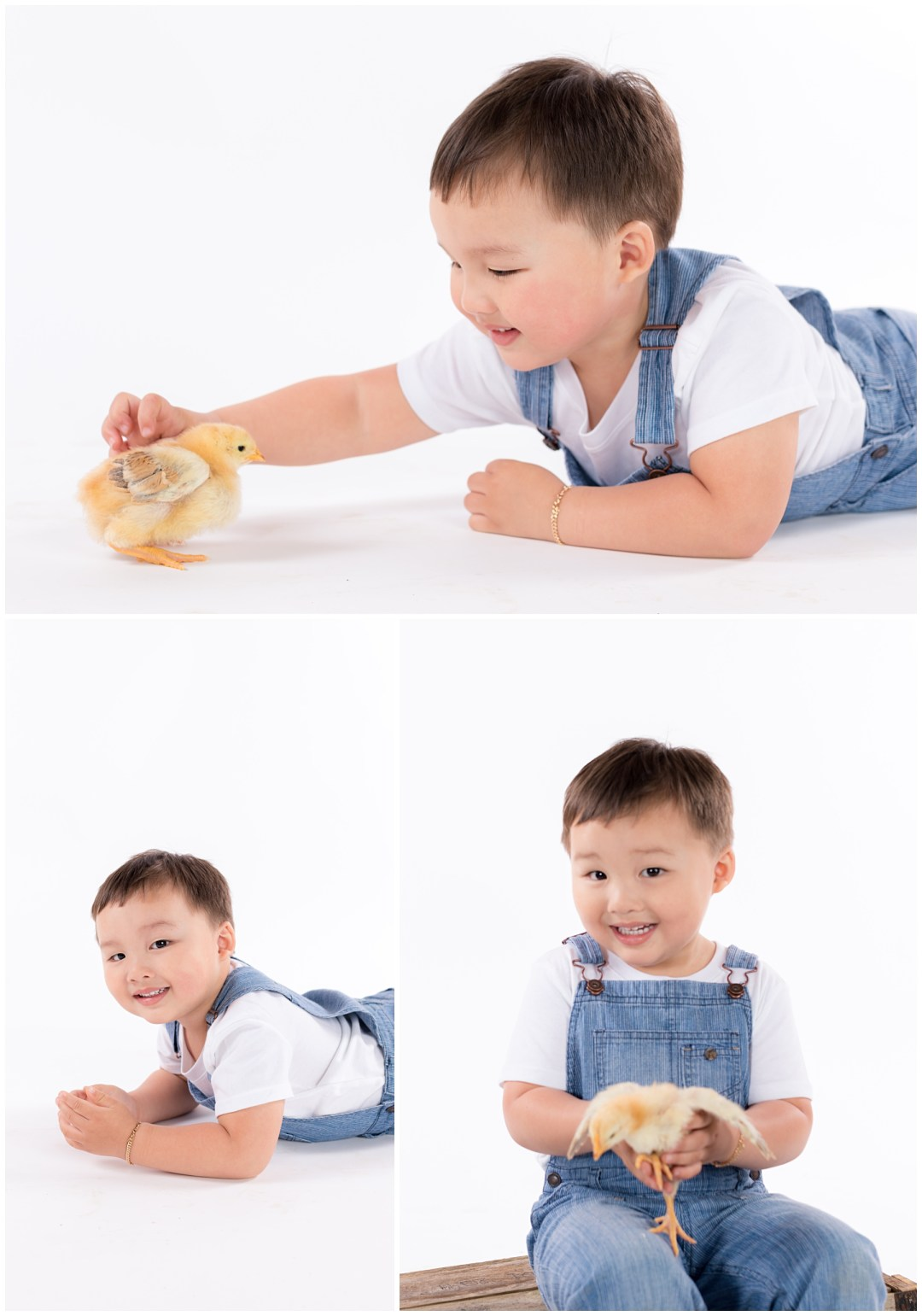 Spring portraits of boy with baby chicks