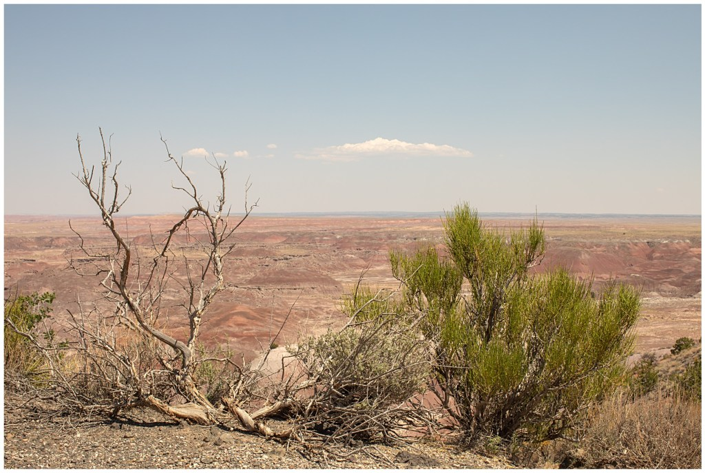 foliage in painted desert
