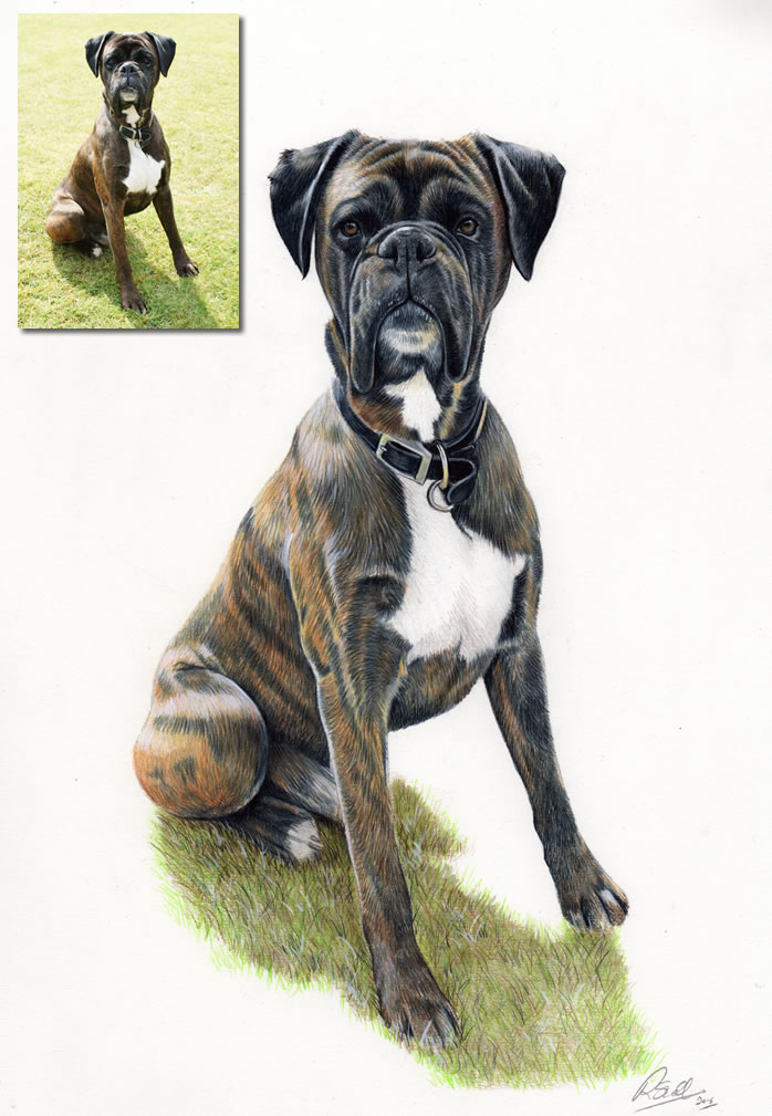 boxer pencil portraits