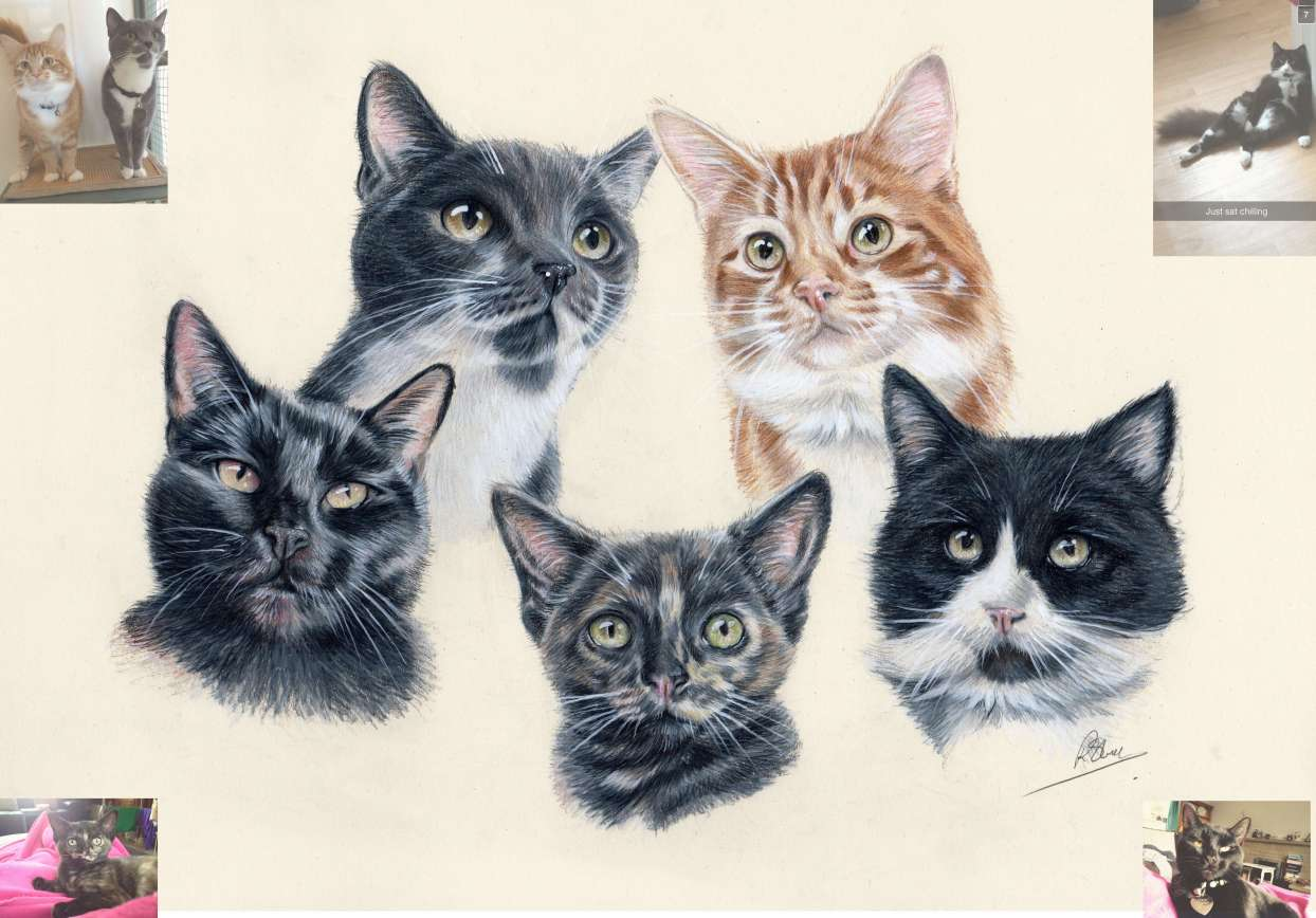 cat portrait compilation