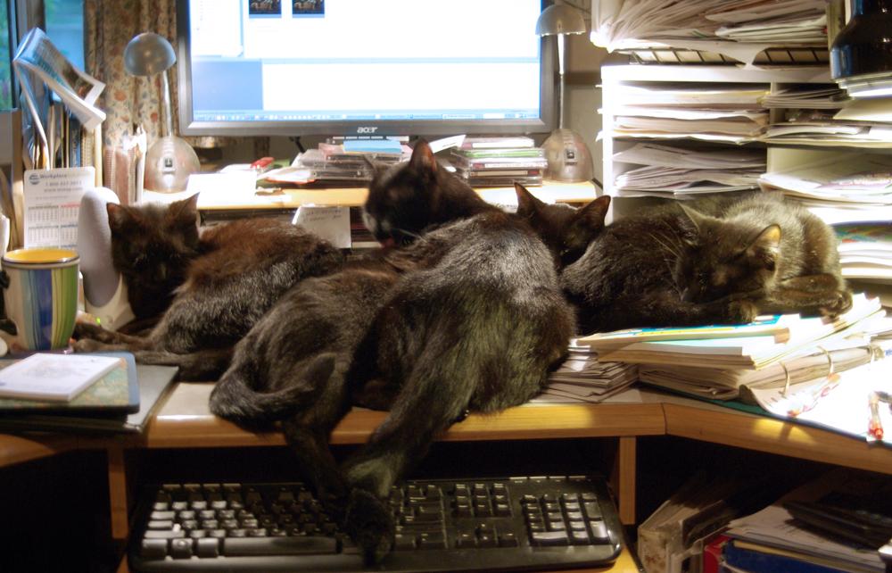 four black cats on desk